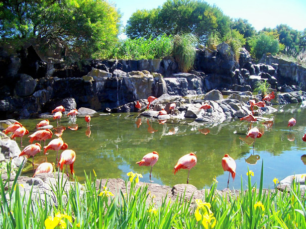 visita el bioparque temaiken en argentina