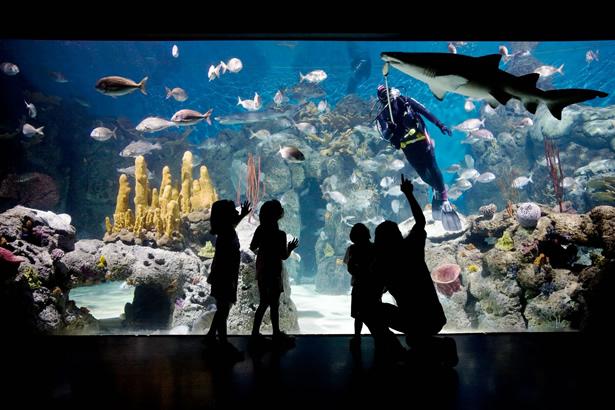 acuario del parque temaiken en escobar, buenos aires