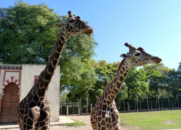 fotos del zoologico de buenos aires argentina
